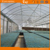 Seeding를 위한 튼튼한 다중 Span Plastic Film Greenhouse
