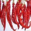 Chili vermelho (grau quente: 2000-3000SHU)