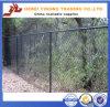 Загородка звена цепи обеспеченностью PVC нового дешевого цены Yb-05 2016 покрытая