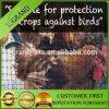 Anti réseau de protection d'oiseau de jardin en plastique