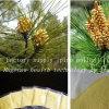 El fabricante suministra el polen natural puro del pino del 100%