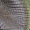 Cuir de Semi-UNITÉ CENTRALE de meubles des graines de crocodile (QDL-FS021)