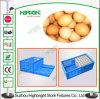 Cassa di plastica commovente del trasporto dell'uovo della scatola di plastica di uso dell'uovo pp