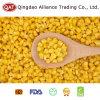 Maïs superbe de collecte neuve avec de bonne qualité