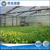 Парник Китая для парника пленки парника земледелия зеленых цветов