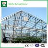 꽃을%s 농업 또는 상업적인 유리제 정원 온실