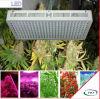 高い発電LEDは温室および薬のために軽く育つ