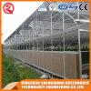 Casa verde plástica del palmo multi de la agricultura para Vegeatbles