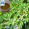 Estratto verde oliva organico naturale del foglio