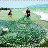 マルチフィラメントの魚の網