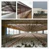 A exploração avícola da construção de aço verteu com equipamento da carcaça