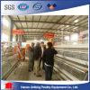 Geflügel-Rahmen der automatischen Hünchen-Huhn-Vögel für Bauernhof-Gebrauch