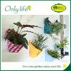 Planteur réutilisable respectueux de l'environnement d'Onlylife Fabrilc pour la décoration à la maison