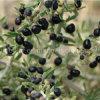 Commercio all'ingrosso a secco organico Goji del nero della frutta di Goji della nespola