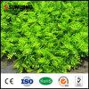 屋外の壁のプラスチック人工的な緑の葉