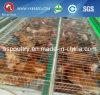 Cage de treillis métallique de bétail pour le poulet de couche de ferme avicole