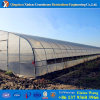 De promotion de constructeur Chambre verte agricole d'envergure simple de vente directement pour le concombre