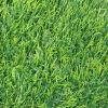سعر رخيصة عشب اصطناعيّة, عشب اصطناعيّة, يرتّب عشب ([ل30-ك])