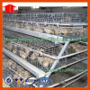 Pollame Cage per Chicken House