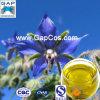 Borage Essential Oil mit Free Sample