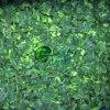 Vegetais desbastados congelados IQF do espinafre