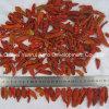 Trockene rote Yunnan-heiße Paprikas Stemless