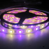 5050SMD LED Strip Light 22lm Per LEDs RGB+W 60LEDs/M IP20