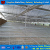 トマトのための中国の工場高品質のフィルムの温室