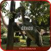 Het waterdichte Model van de Dinosaurus van de Speelplaats van de Dinosaurus Openlucht