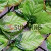플라스틱 인공적인 잎 담 회양목 산울타리