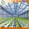 Hightech- Gewächshäuser Wasserkultur für Gemüse-Zucht