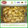 Gengibre seco orgânico de nova produção com Eco Cert