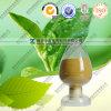 Green cinese Tea Extract 98% Tea Polyphenols per Food Grade