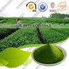 Età organica Matcha della polvere di Matcha del tè verde nuova