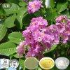 Banaba Leaf Extract, Corosolic Acid1% bis 98%