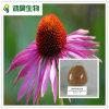 Polvere del Echinacea