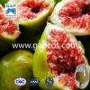 Poudre hydrosoluble d'extrait de figue de qualité