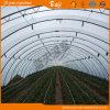 Serra del traforo di alta qualità per la piantatura di verdure