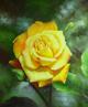 Lona con la flor viva