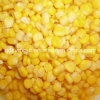 425g 340g Sweet Corn com Highquality Good Price (HACCP, HALAL, KOSHER, BRC, FDA)