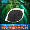 Fonte do extrato do Kelp de Huminrich que planta o melhor fertilizante baixo para o fertilizante da alga dos tomates
