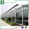 Invernadero de la hoja del policarbonato de la agricultura para plantar/las flores