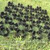 園芸のペーバーの草のためのプラスチック格子