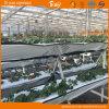 Chambre verte en verre durable de fournisseur de la Chine