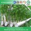 Heiße Verkauf Einzeln-Überspannung kleines Wasserkulturplastikgewächshaus für Gemüse