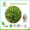 Selling caliente Green Tea Extract /Green Tea Polyphenols 98%/Tea Extraction Catechin