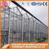 De commerciële Serre van het Blad van het Polycarbonaat van het Roestvrij staal voor Bloem
