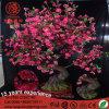 Lumière extérieure d'arbre de bonzaies de la CE DEL de Hotsale pour la décoration de Noël