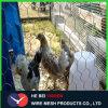 Galvanized/PVC六角形ワイヤーMesh&Chickenの金網