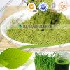 自然な緑のムギの草力